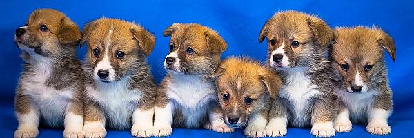 Топ 5 кращих порід собак для квартири