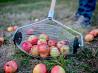 Ролл для сбора яблок доставка из г.Полтава