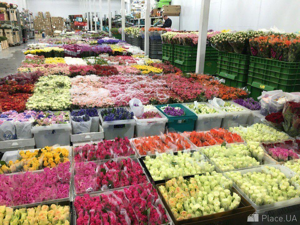 Оптовые базы склад цветов киев нивки