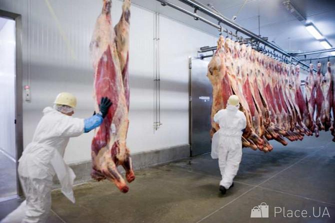 клематисов фото несунов со смоленского мясокомбината найдете ориентиры