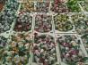 Сухофрукты в шоколаде. Шоколадные конфеты. Конфеты 40 видов доставка из г.Киев
