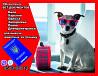 Оформление вет документов для вывоз собаки из Украины в Европу Киев