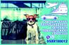 Ветеринарная справка форма 1 Справка на титры, ветеринарный паспорт Харьков