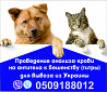 Анализ на бешенство Евросправка для собак титры на антитела Официально Одесса