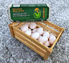 Яйця органічні курячі харчові, упаковка 10шт доставка з м. Київ