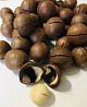 Орех макадамия в скорлупе, 1кг, орехи доставка из г.Киев