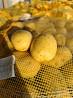 Продам картоплю мережевої якості Киев