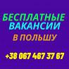 Сбор помидоров в теплице От 27830 грн/делаем Визы/семейные пары/польша Винница