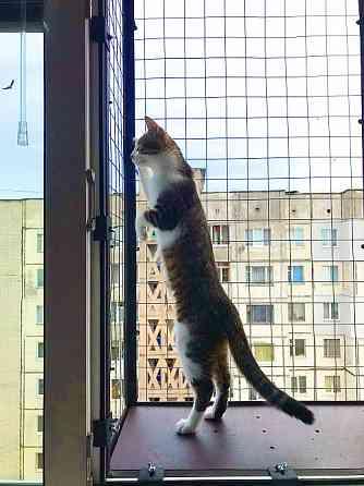 Вольер для кота, на окно. доставка из г.Днепр