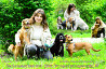 Зоогостиница/гостиница/передержка/выгул для собак (животных) от 60 грн Киев